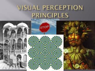 Visual Perception Principles