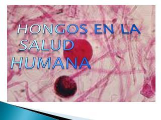 HONGOS en LA  SALUD HUMANA