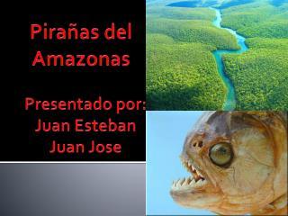 Pirañas del  Amazonas