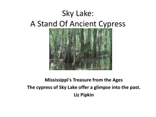 Sky Lake:  A Stand Of Ancient Cypress