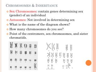 Chromosomes & Inheritance