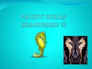 Pacific Ocean seahorses!  