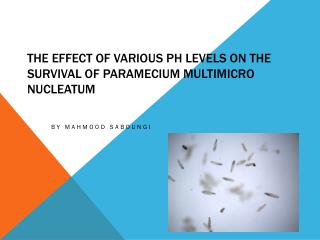 The Effect of Various pH levels on the Survival of Paramecium multimicro nucleatum