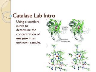 Catalase Lab Intro