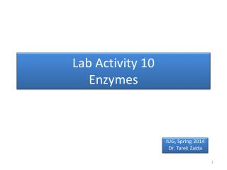 Lab Activity 10 Enzymes