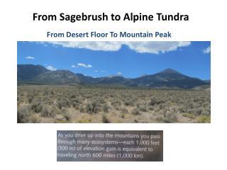 From Sagebrush to Alpine Tundra