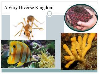 A Very Diverse Kingdom