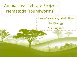 Animal  Invertebrate  Project Nematoda  ( roundworms )