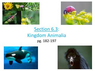 Section 6.3 : Kingdom  Animalia pg. 182-197