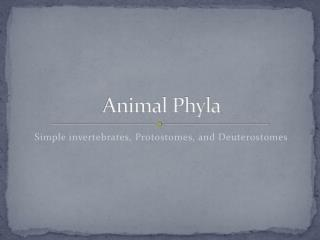 Animal Phyla