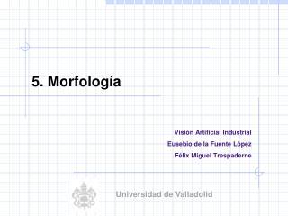 5.  Morfología