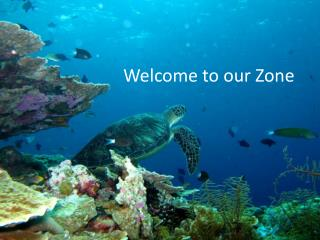 Welcome to our Zone