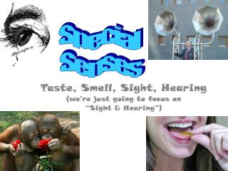 Taste, Smell, Sight, Hearing (we�re just going to focus on  �Sight & Hearing�)