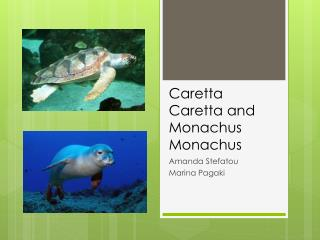 Caretta Caretta and  Monachus Monachus