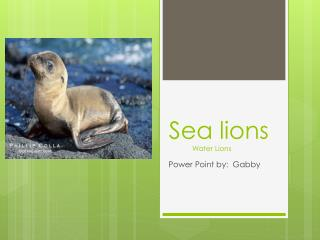 Sea lions             Water Lions
