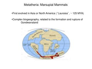 First evolved in Asia or North America ( ' Lauraisa ' , ~ 125 MYA)