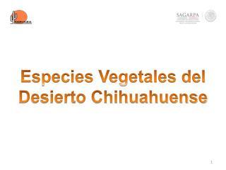 Especies Vegetales del Desierto Chihuahuense