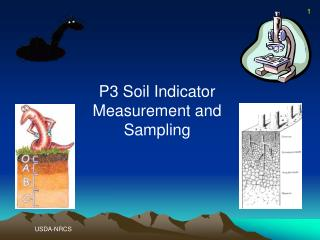 P3 Soil Indicator Measurement and Sampling