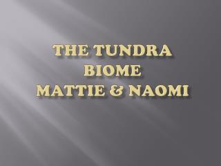 The Tundra  Biome Mattie & Naomi