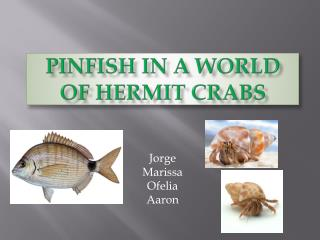 PINFISH IN A WORLD OF HERMIT CRABS