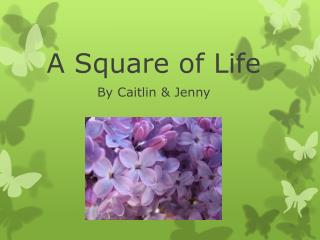 A Square of Life