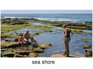 s ea shore