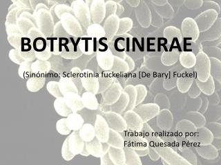 (Sinónimo:  Sclerotinia fuckeliana  [De  Bary ]  Fuckel )