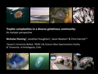 Trophic complexities in a diverse gelatinous community : An  isotopic  perspective