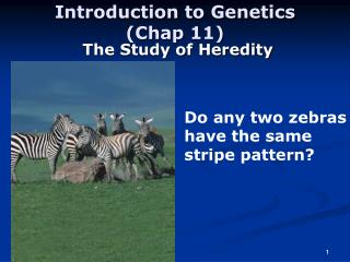 Introduction to Genetics (Chap 11)