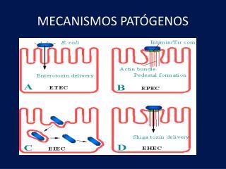MECANISMOS PATÓGENOS