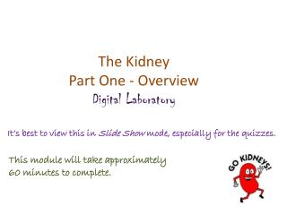 The Kidney Part One - Overview Digital Laboratory