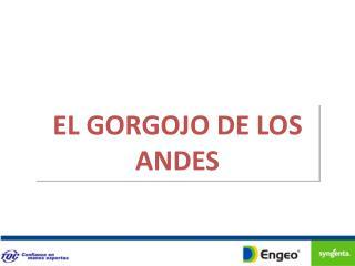 EL GORGOJO DE LOS ANDES