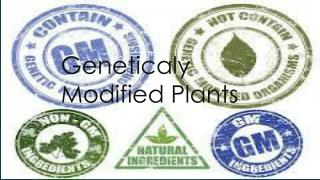 Geneticaly M odified P lants