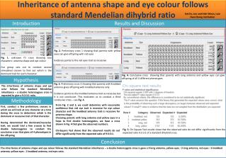 Inheritance of antenna shape and eye  colour  follows standard  Mendelian dihybrid  ratio