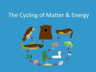 The Cycling of Matter & Energy