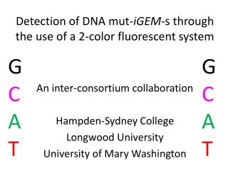 Detection of DNA  mut - iGEM -s through the use of a 2-color fluorescent system