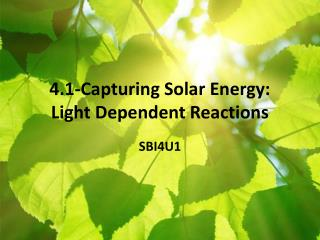 4.1-Capturing Solar Energy: Light  Dependent Reactions