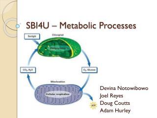 SBI4U – Metabolic Processes
