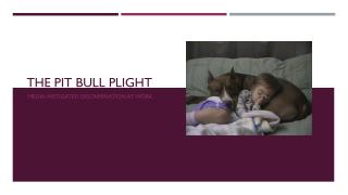 The pit bull plight