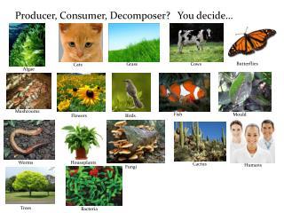 Producer, Consumer, Decomposer?   You decide…