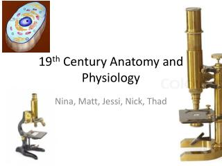19 th  Century  Anatomy  and  Physiology