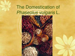 The Domestication of Phaseolus vulgaris L.