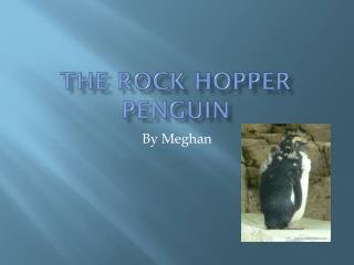 The Rock hopper penguin