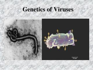 Genetics of  Viruses