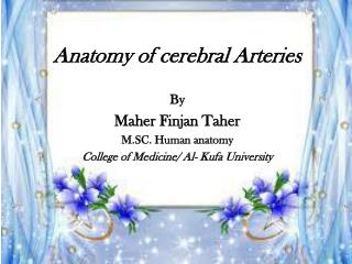 Anatomy of cerebral Arteries By Maher Finjan Taher M.SC. Human anatomy
