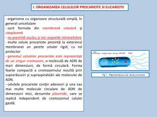 I.  ORGANIZAREA CELULELOR PROCARIOTE SI EUCARIOTE