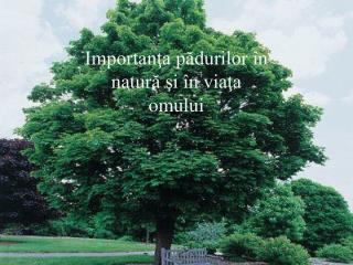 Importanţa pădurilor în natură şi în viaţa omului