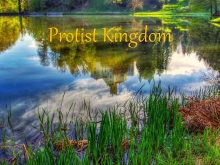 Protist  Kingdom