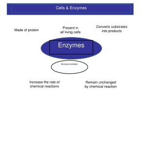Cells & Enzymes