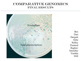 Comparative Genomics Final Results